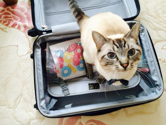 201601cat-on-a-baggage