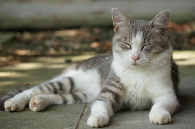綺麗な姿勢で目を閉じる猫