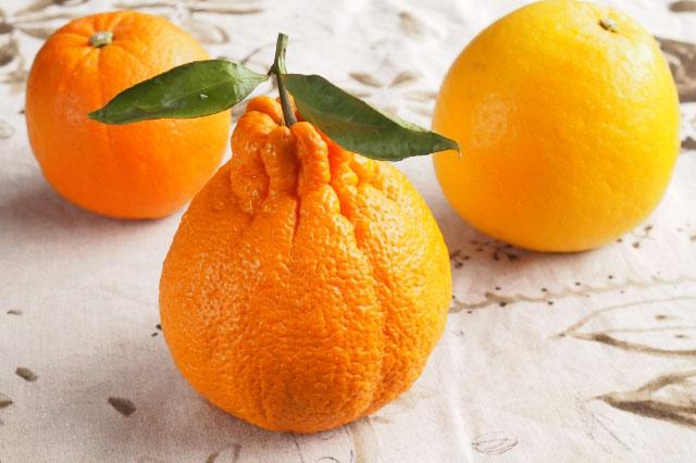 葉酸を含んでいそうな柑橘類